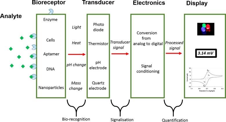 electronic biosensor1